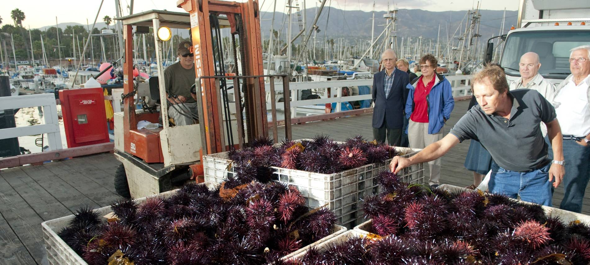 People watching men bring in crates of fresh sea urchins