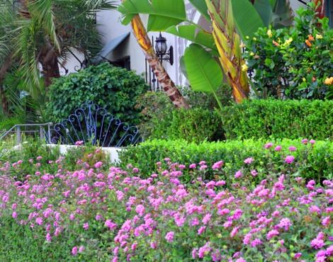 Rows of green shrubs and colorful flowers